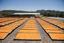 Dried Apricot Facilities Stock Photos