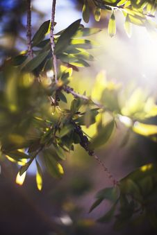 Light In The Trees And Branches Stock Photos