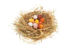 Free Eggs In Nest Stock Photography - 7835562
