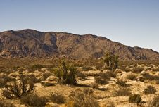 Free Mojave Desert Scene Stock Photo - 7835960