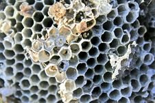Free Hornet Nest Royalty Free Stock Photo - 7836195