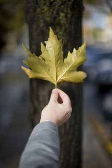 Free Man Holding Leaf Stock Photography - 7836352