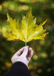 Free Man Holding Leaf Royalty Free Stock Photo - 7836355