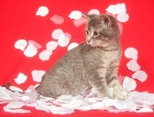 Free Kitten And Rose Petals Royalty Free Stock Photos - 7836498