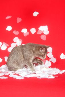 Free Kitten And Rose Petals Stock Image - 7836501