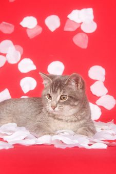 Free Kitten And Rose Petals Royalty Free Stock Image - 7836506