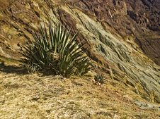 Free Agave On A Crater S Edge Stock Photo - 7836580