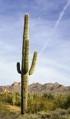 Wilderness Desert Trail Stock Image