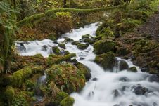 Free A Tributary River In The Columbia River Gorge Stock Photos - 7838423