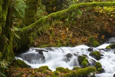 Free A Tributary River In The Columbia River Gorge Royalty Free Stock Images - 7838439