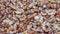 Free Walnuts Background Stock Photos - 78387713