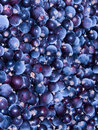 Free Currant Berries Frozen Stock Images - 7844514