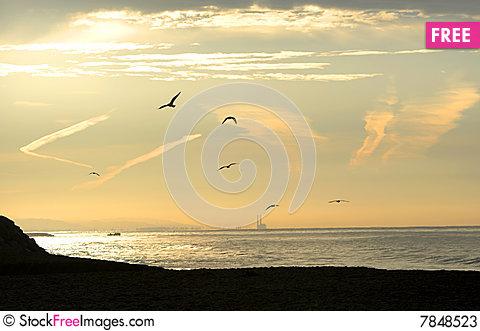 Free Sunrise Over The Beach With Seagulls Flying Stock Photos - 7848523