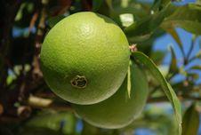Free Green Orange Stock Image - 7841601