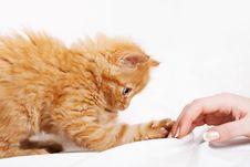 Free Kitten Stock Photo - 7843320