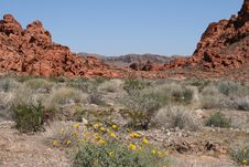 Free Valley Of Fire, Nevada Royalty Free Stock Photos - 7843368