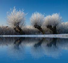 Free Tree Reflection Stock Photos - 7843713