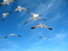 Free Seagulls Stock Image - 7843911
