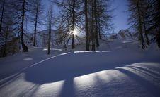 Free Shadows On The Snow Royalty Free Stock Photos - 7844008