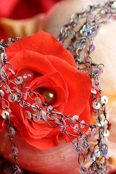Free Red Rose Pearl Stock Image - 7844451