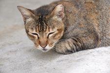 Free Sleepy Cat Stock Images - 7844594