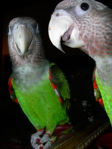 Free Parrot Stock Images - 7844854