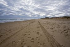 Free Footprints On The Beach Royalty Free Stock Photos - 7845498