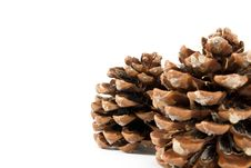 Free Cone Of Pine Royalty Free Stock Image - 7845606