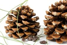 Free Two Cone Of Pine Royalty Free Stock Photography - 7845637