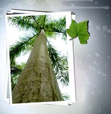 Free Tropic Tree Stock Photography - 7845642