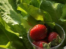 Free Red Strawberries With Lettuce Stock Image - 7845881