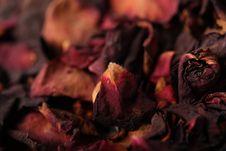 Free Dry Petals  Rose Stock Photos - 7846263