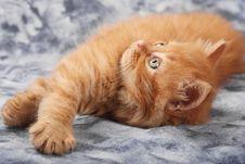 Free Kitten Stock Image - 7846291