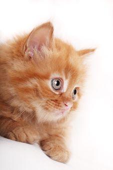 Free Kitten Stock Images - 7846454