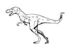 Free Tyrannosaurus Rex Stock Images - 7846854