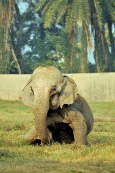 Free Elephant Royalty Free Stock Photo - 7847315