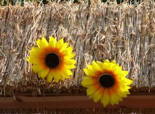 Thatched Roof Decorated With Sunflowers Stock Image