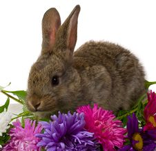 Free Bunny And Flowers Stock Image - 7847681