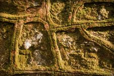 Free Moss On Wall Stock Photos - 7847933