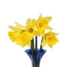 Free Daffodils Royalty Free Stock Photos - 7847938