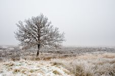 Free Winter Tree Landscape Royalty Free Stock Images - 7848119