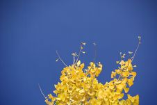 Free A Tree With Fall Leaves Stock Images - 7848724
