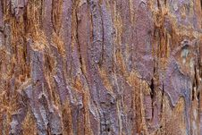 Free Tree Bark Royalty Free Stock Image - 7849726