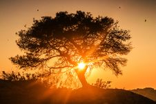 Free Tree At Sunrise Stock Photos - 78433363