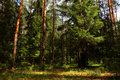Free Trees In A Forest Stock Photos - 78498793
