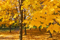 Free Gold Autumn Stock Photos - 7853693