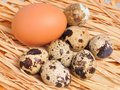 Free Seven Spotted Eggs With One Yellow Egg Stock Photo - 7857850