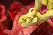 Snake In The Roses Stock Image