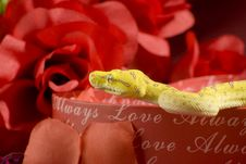 Snake In The Roses Stock Images