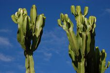 Free Cactus Stock Images - 7851034